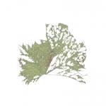7_14p46x46-leaf-g.jpg