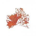 7_14p46x46-leaf-r.jpg